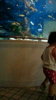☆水族館☆