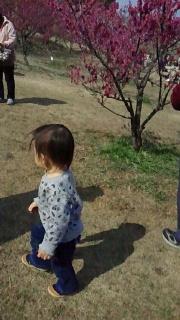 佐布里池の梅まつり